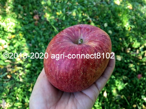 f:id:agri-connect:20201120233720j:plain