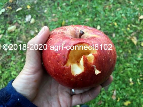 f:id:agri-connect:20201120234000j:plain
