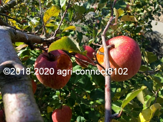 f:id:agri-connect:20201120234613j:plain