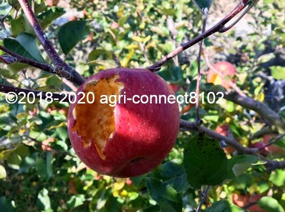 f:id:agri-connect:20201120234635j:plain