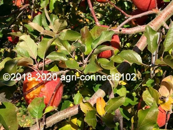 f:id:agri-connect:20201120234642j:plain