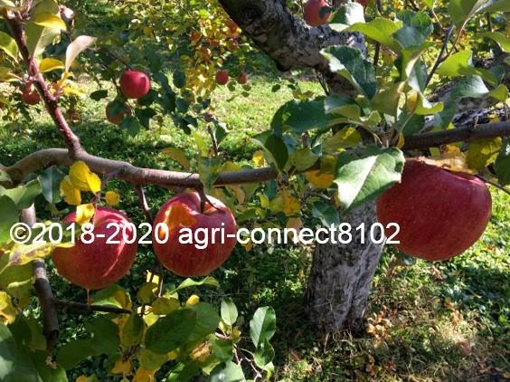 f:id:agri-connect:20201120234656j:plain