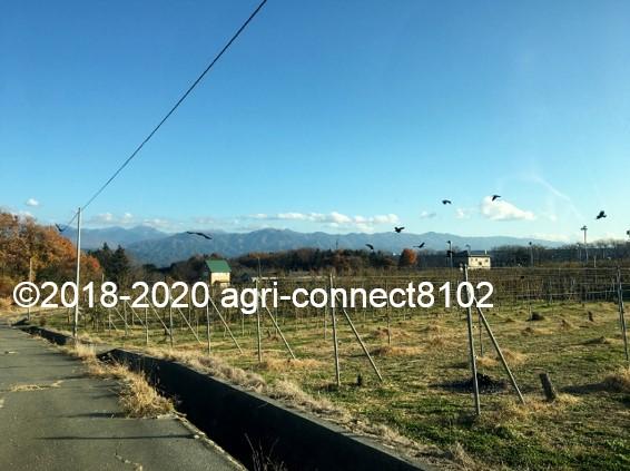 f:id:agri-connect:20201120235329j:plain
