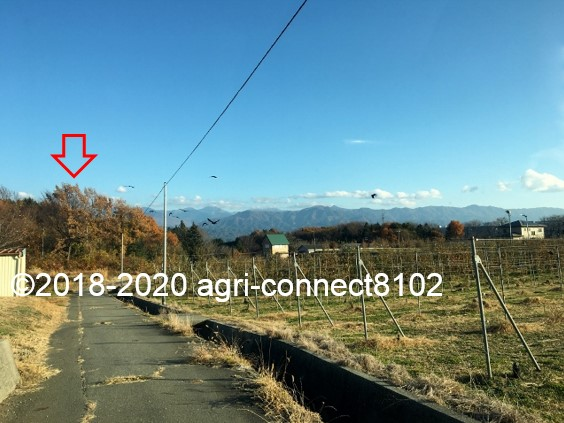 f:id:agri-connect:20201120235335j:plain