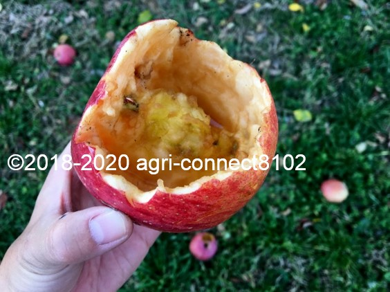 f:id:agri-connect:20201120235456j:plain