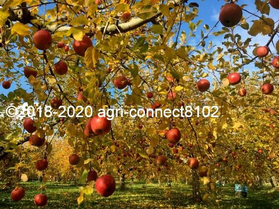 f:id:agri-connect:20201127232342j:plain