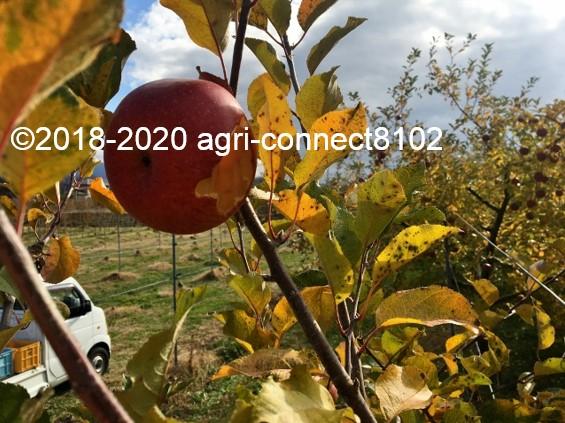 f:id:agri-connect:20201127232345j:plain