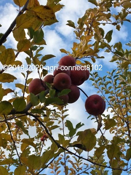 f:id:agri-connect:20201127232724j:plain
