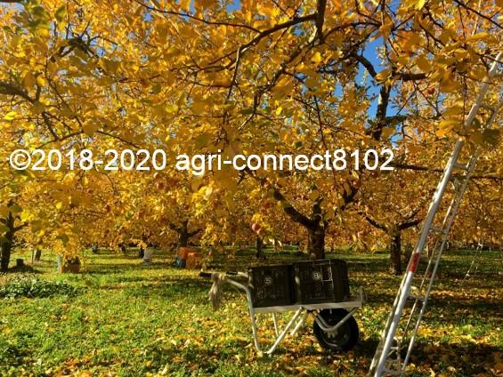 f:id:agri-connect:20201127232851j:plain