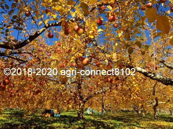 f:id:agri-connect:20201127232857j:plain