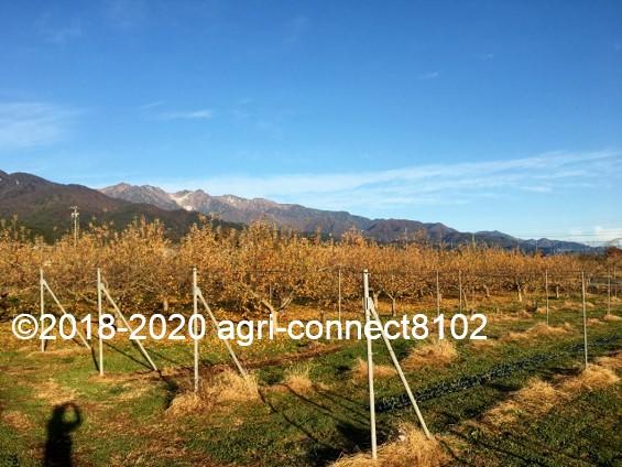 f:id:agri-connect:20201127234217j:plain