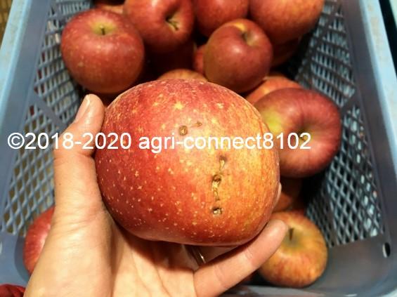 f:id:agri-connect:20201205224559j:plain