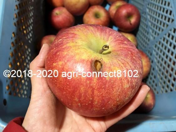 f:id:agri-connect:20201205224608j:plain