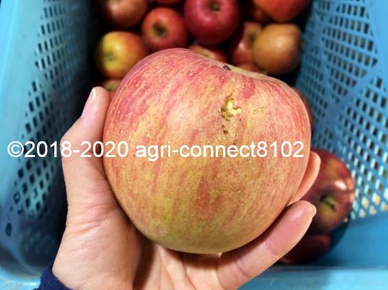 f:id:agri-connect:20201205224615j:plain