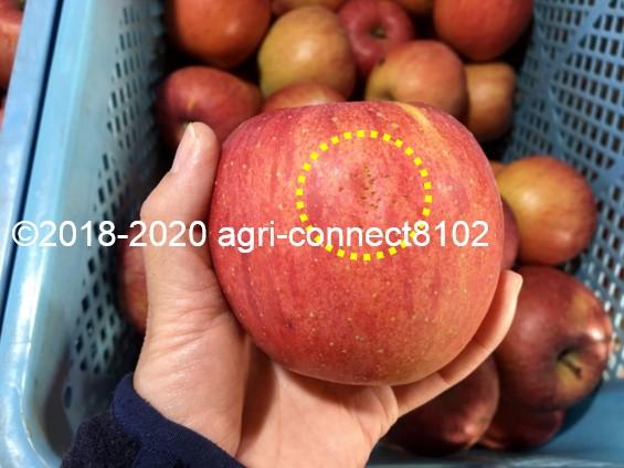 f:id:agri-connect:20201205224621j:plain