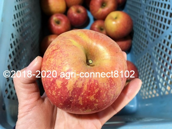 f:id:agri-connect:20201205224925j:plain