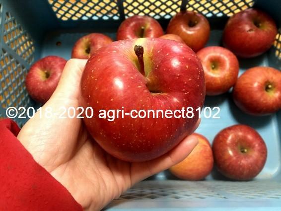 f:id:agri-connect:20201206154342j:plain