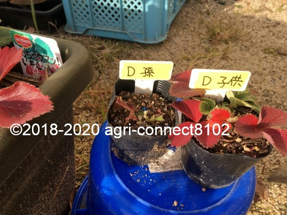 f:id:agri-connect:20201218231051j:plain