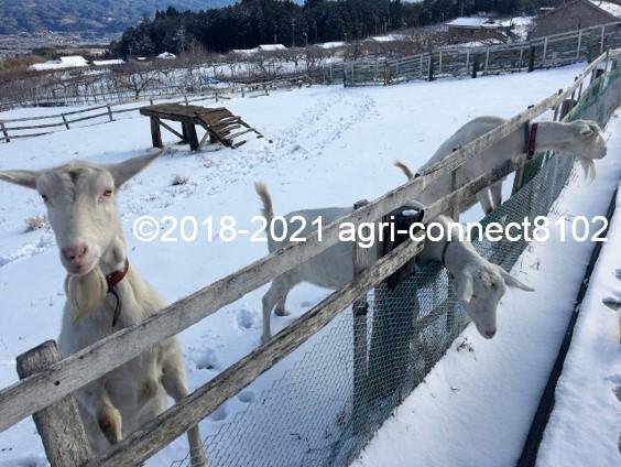 f:id:agri-connect:20210106212022j:plain