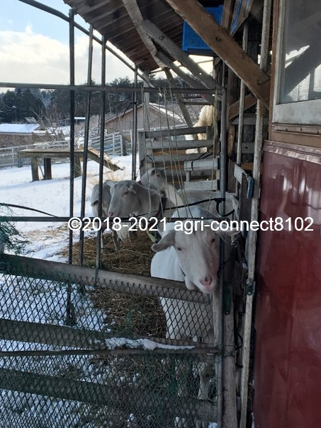 f:id:agri-connect:20210106212348j:plain