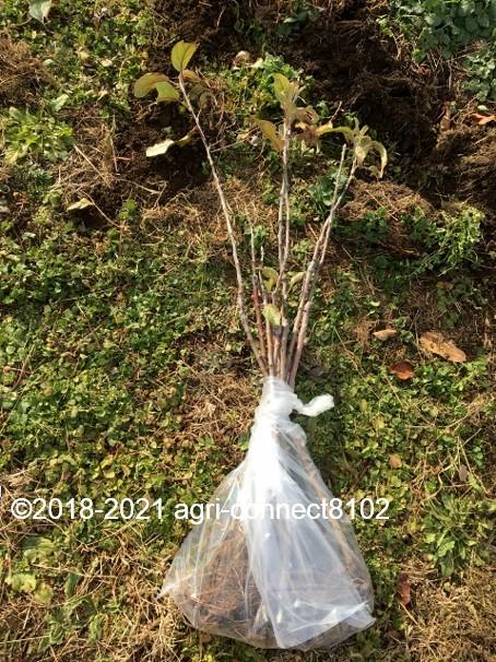 f:id:agri-connect:20210119210718j:plain