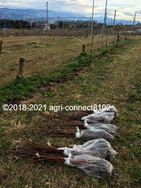 f:id:agri-connect:20210119210723j:plain
