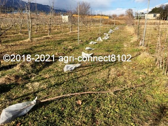 f:id:agri-connect:20210119224725j:plain