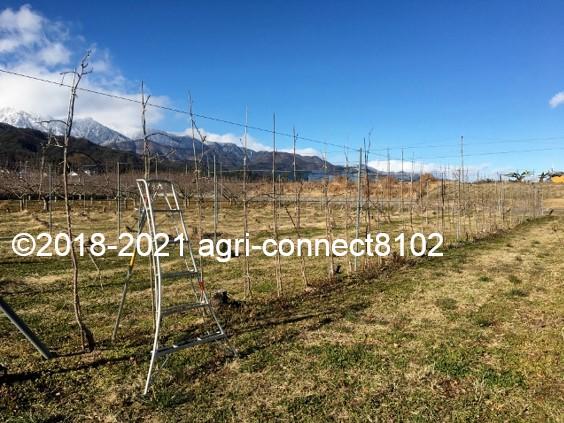 f:id:agri-connect:20210121222759j:plain