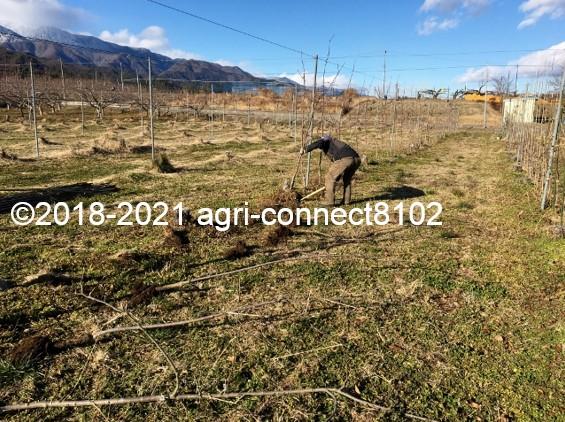 f:id:agri-connect:20210121222911j:plain