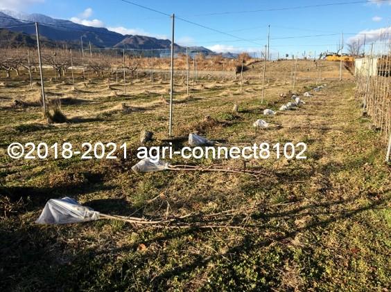 f:id:agri-connect:20210121222916j:plain