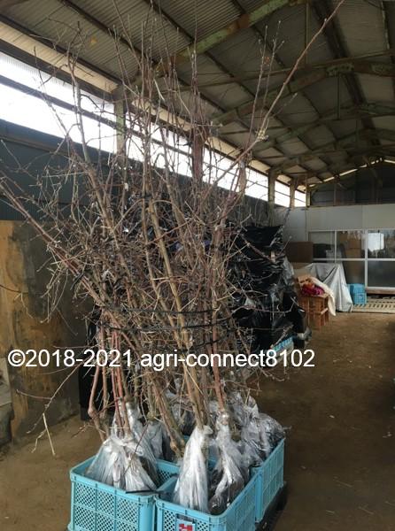 f:id:agri-connect:20210125221117j:plain