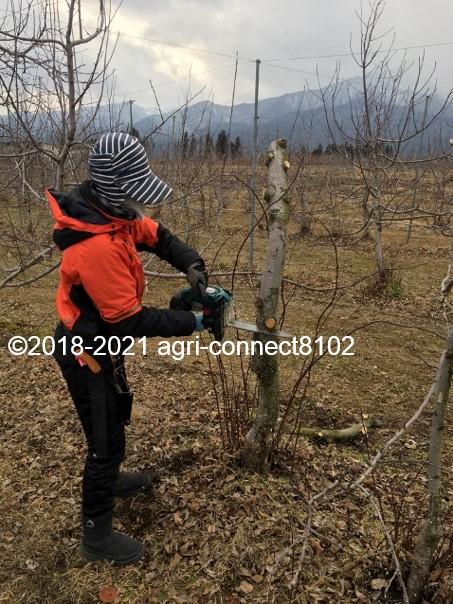 f:id:agri-connect:20210206211403j:plain