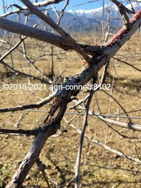 f:id:agri-connect:20210206212636j:plain