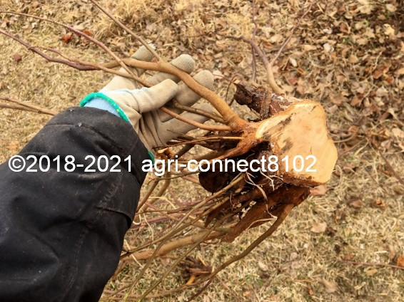 f:id:agri-connect:20210221223910j:plain