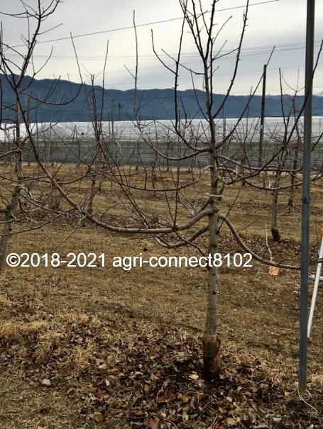 f:id:agri-connect:20210221224032j:plain