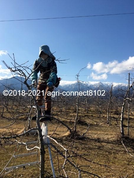 f:id:agri-connect:20210221224122j:plain