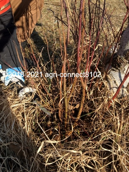f:id:agri-connect:20210221224543j:plain