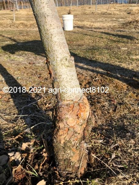 f:id:agri-connect:20210221225353j:plain