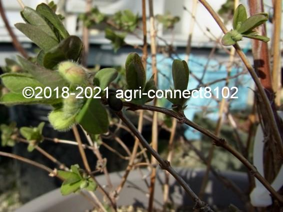 f:id:agri-connect:20210321000309j:plain