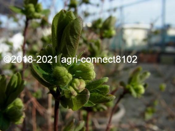 f:id:agri-connect:20210321000313j:plain