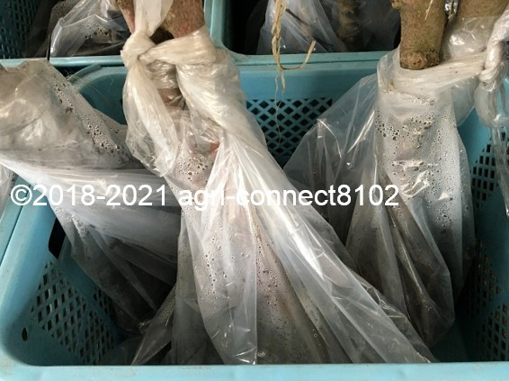 f:id:agri-connect:20210404225149j:plain
