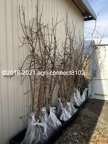 f:id:agri-connect:20210404225340j:plain
