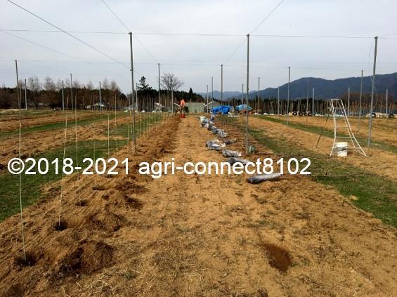 f:id:agri-connect:20210404230510j:plain