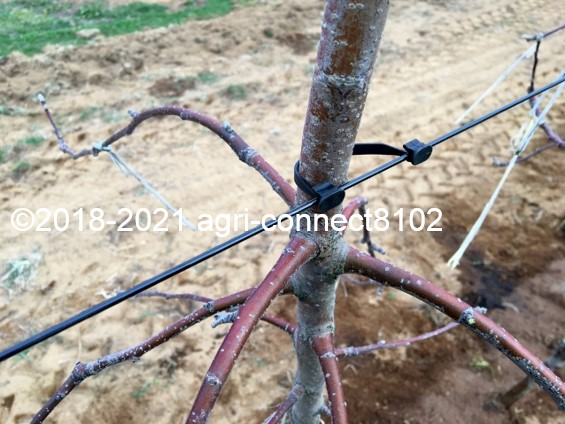 f:id:agri-connect:20210404230750j:plain