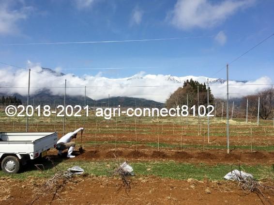 f:id:agri-connect:20210404231455j:plain