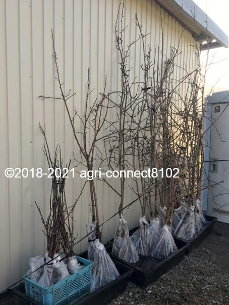 f:id:agri-connect:20210404232053j:plain