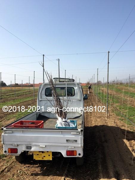 f:id:agri-connect:20210404232414j:plain