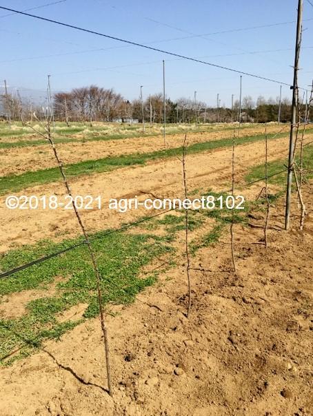 f:id:agri-connect:20210404232722j:plain