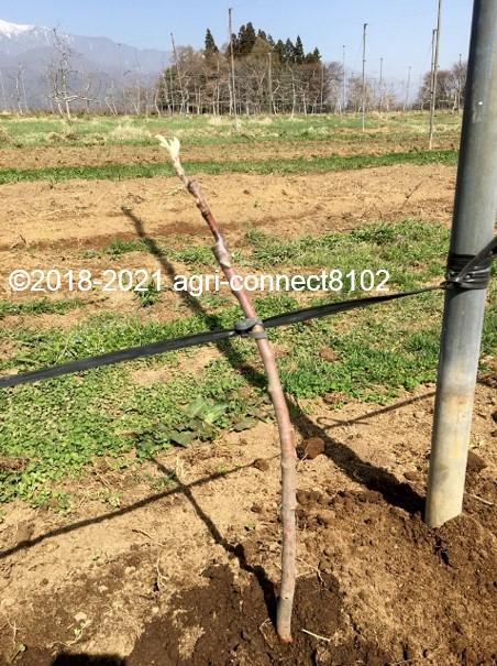 f:id:agri-connect:20210404232730j:plain
