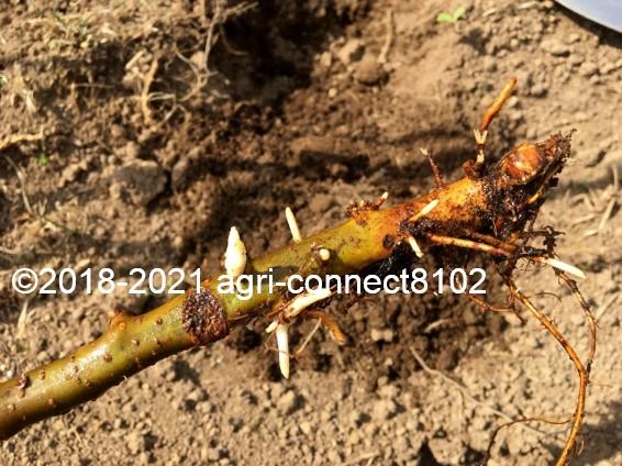 f:id:agri-connect:20210408221443j:plain